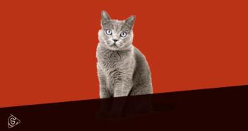STOP all'ingiustificata violenza del gatto domestico